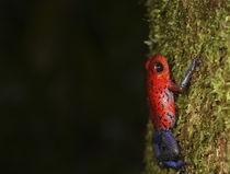 Costa Rica von Danita Delimont