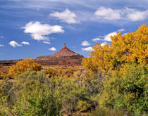 North Six Shooter Peak framed with Yellow Fall Cottonwoods by Danita Delimont