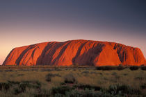 Uluru or Ayer's Rock by Danita Delimont