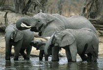 Botswana by Danita Delimont