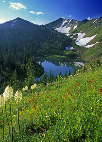 Alpine Wildflowers in the Jewel Basin in the Swan Range of Montana von Danita Delimont