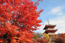Kiyomizu temple in Autumn color by Danita Delimont