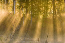 Foggy Sunrise at Tamarac NWR near Detroit Lakes Minnesota by Danita Delimont