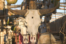 Mesilla: Historic Mesilla Plaza Decorative New Mexico Cow Skulls von Danita Delimont