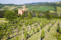 View through Vineyard to Chiesa Di Casaglia von Danita Delimont