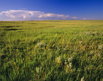 Short Grass Prairie in remote northeastern Montana by Danita Delimont