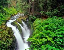 Sol Duc Falls in Olympic National Park in Washington von Danita Delimont