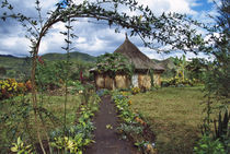 Papua New Guinea by Danita Delimont