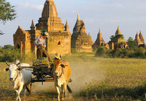 A cart is drawn past some Bagan temples at sunset by Danita Delimont