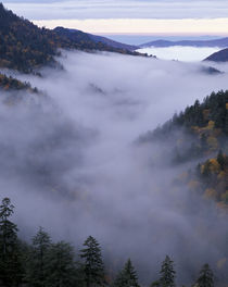 Foggy Valley viewed from Morton Overlook by Danita Delimont