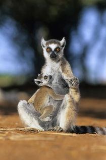 Madagascar von Danita Delimont