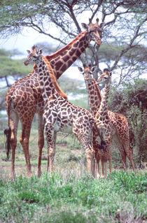 Tanzania Africa 2005 by Danita Delimont