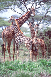 Tanzania Africa 2005 von Danita Delimont