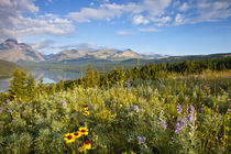 Prairie wildflowers and Lower Two Medicine Lake in Glacier National Park and Blackfeet Reservation in MontaUSA by Danita Delimont