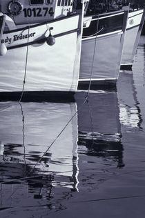 White image by Danita Delimont