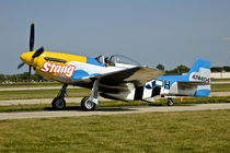 North American P-51 D Stang on the runway by Danita Delimont