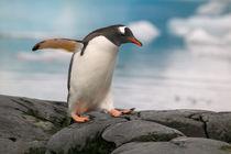 Antarctica Pennisula von Danita Delimont