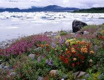 Alaska by Danita Delimont