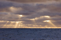 God rays pierce stormy clouds above ocean by Danita Delimont