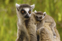 Southern MADAGASCAR von Danita Delimont