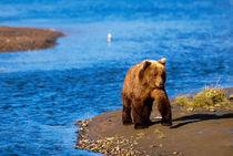 Katmai National Park by Danita Delimont