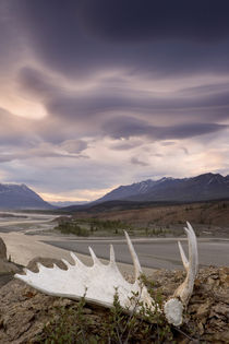 Moose antler and rugged landscape by Danita Delimont