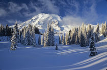 Rainier and Paradise Valley after snow storm von Danita Delimont