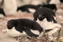 Antarctica Pennisula by Danita Delimont
