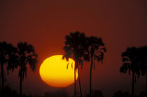 Zibalianja; Telephoto view of orange and yellow sun setting between two palm trees von Danita Delimont
