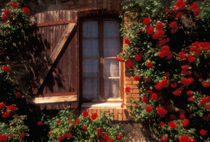 House with summer roses in bloom by Danita Delimont