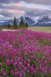 View of wildflowers and Fairweather Range by Danita Delimont