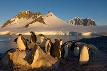 Southern Ocean by Danita Delimont