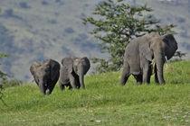 Tanzania von Danita Delimont