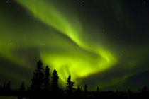 Aurora Borealis in the night sky von Danita Delimont
