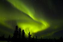 Aurora Borealis in the night sky von Danita Delimont