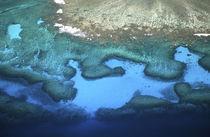 Coral Reefs - aerial von Danita Delimont