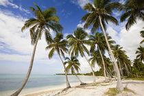 Beach at Punta Cana von Danita Delimont