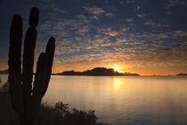 The sunrise over Isla Danzante in the Gulf of California from near Loreto Mexico von Danita Delimont