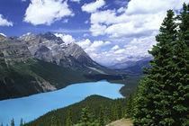 Peyto Lake von Danita Delimont