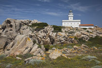 Capo Testa lighthouse by Danita Delimont