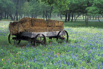 Old wagon in field of wildflowers von Danita Delimont