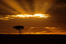 A mouth openning sunrise in the Maasai Mara Kenya von Danita Delimont