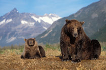 Alaskan peninsula von Danita Delimont