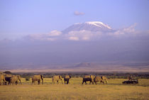 Elephants and safari vehicle with Mt Kilimanjaro in distance von Danita Delimont