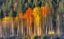 Fall colors reflect in the Williamson River in southern Oregon von Danita Delimont