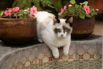 Kitten rests in courtyard fountain by Danita Delimont