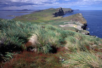 Coastal landscape with tussock grass by Danita Delimont