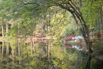 Trees and azaleas reflection in a lake von Danita Delimont