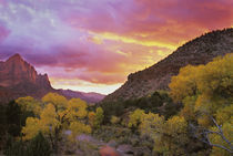 The Watchman in the distance with Virgin River in foreground reflecting a sunset sky von Danita Delimont