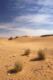 Sand dunes by Danita Delimont